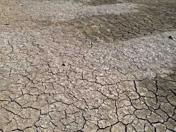 乾燥した大地.jpg